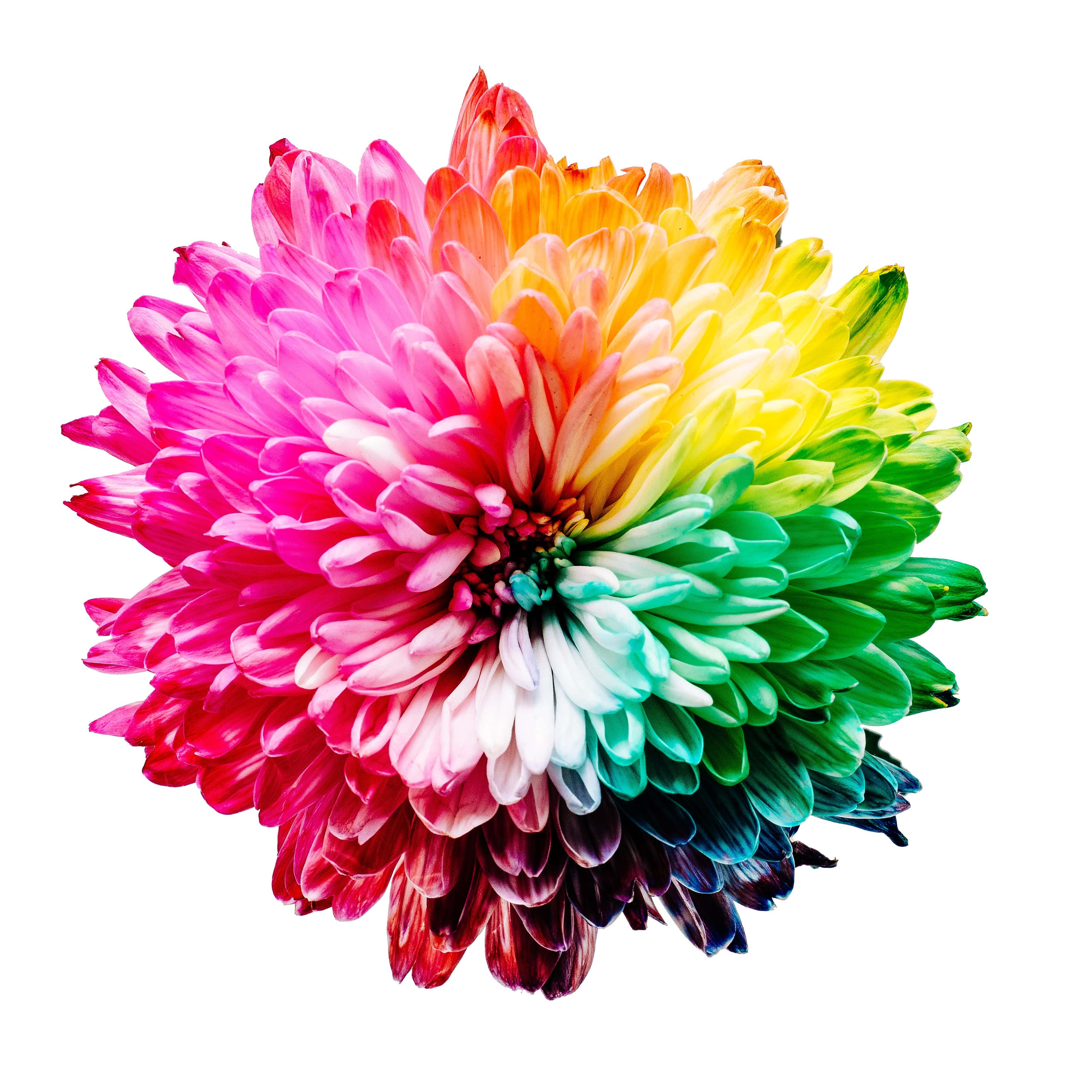 Give your website a makeover with the right colour schemes 2